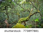 amazing tropical forest with... | Shutterstock . vector #773897881