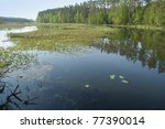 Shallow lake overgrown with water plants - stock photo