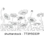 daisy field outline sketch hand ... | Shutterstock .eps vector #773950339