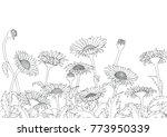 daisy field outline sketch hand ... | Shutterstock .eps vector #773950339