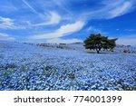 ibaraki  japan   may 3  2017.... | Shutterstock . vector #774001399