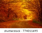 beautiful sunny autumn... | Shutterstock . vector #774011695