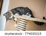 Stock photo young cat plays with a toy mouse 774035215