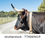 portrait of a bull with its big ... | Shutterstock . vector #774069619