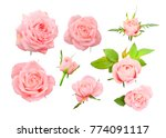 Stock photo set of delicate pink roses bows and leaves isolated on white background 774091117