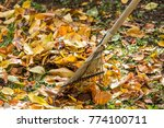 On The Ground Autumnal Leaves...
