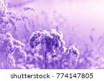 color of the year 2018  ultra... | Shutterstock . vector #774147805