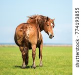 draft horse from the back in... | Shutterstock . vector #774193855