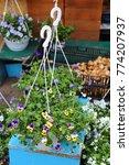 spring seedlings of flowers in...   Shutterstock . vector #774207937