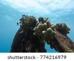 coral grown up on the... | Shutterstock . vector #774216979