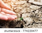 hands holding a tree growing on ... | Shutterstock . vector #774220477
