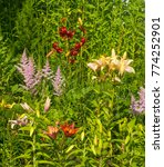 Small photo of Composition of garden flowers
