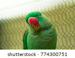 closeup of a very cute and... | Shutterstock . vector #774300751