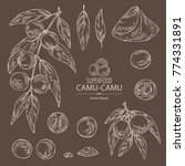 collection of camu camu  branch ... | Shutterstock .eps vector #774331891