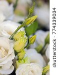 white beautiful eustoma flowers ... | Shutterstock . vector #774339034