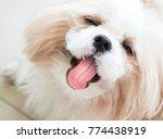 Dog  Shih Tzu Sitting On The...