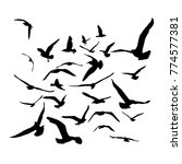 seagulls black silhouette on... | Shutterstock . vector #774577381