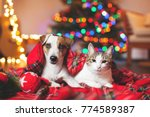 Stock photo cat and dog under a christmas tree pets under plaid 774589387