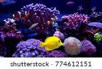 Amazing coral reef aquarium tank scene - stock photo