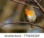 robin   erithacus rubecula  | Shutterstock . vector #774650269