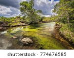 cano cristales  river of five... | Shutterstock . vector #774676585