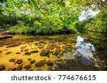 cano cristales  river of five... | Shutterstock . vector #774676615