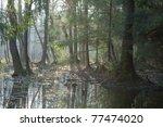 Bialowieza Forest Riparian...