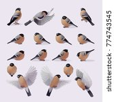 vector bullfinches set. cartoon ... | Shutterstock .eps vector #774743545