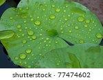 Water Drops On Leaf Lotus