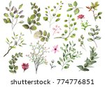 watercolor botanical collection.... | Shutterstock . vector #774776851