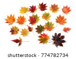 autumn maple leaves | Shutterstock . vector #774782734