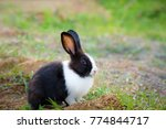 Stock photo black and white hair bunny in green field 774844717