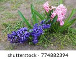 flowerbed with spring pink and...   Shutterstock . vector #774882394