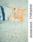 Stock photo little red kitten cat lies on the fluffy carpet at home little kitten sleeps close up of a 774926545