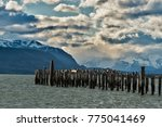 the imperial shags king... | Shutterstock . vector #775041469