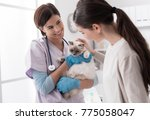 Stock photo smiling professional veterinarian holding a beautiful cat after examination the pet owner is 775058047