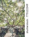 wooden bridge with big tree... | Shutterstock . vector #775122349