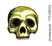 hand drawing skull. human skull ... | Shutterstock .eps vector #775158331