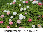 spring meadow bright colored...   Shutterstock . vector #775163821