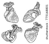 set of human hearts anatomy.... | Shutterstock .eps vector #775168801