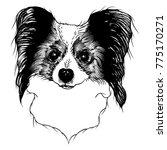 portrait of  papillon doggy.... | Shutterstock .eps vector #775170271