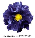 blue  dahlia. flower on a white ... | Shutterstock . vector #775173379