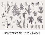 set with christmas plants.... | Shutterstock .eps vector #775216291