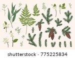 set with winter plants. vector... | Shutterstock .eps vector #775225834