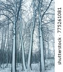 snow covered trees. | Shutterstock . vector #775261081