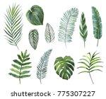 set of tropical plants leaves. | Shutterstock . vector #775307227