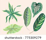 green tropical vintage leaves... | Shutterstock .eps vector #775309279