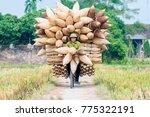 hanoi  vietnam   november 13 ... | Shutterstock . vector #775322191