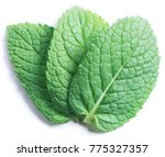 three spearmint leaves or mint... | Shutterstock . vector #775327357