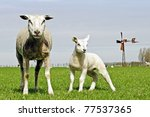 sheep with young lamb - stock photo